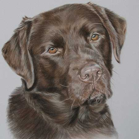 Pet Portraits - Chocolate Labrador Portrait