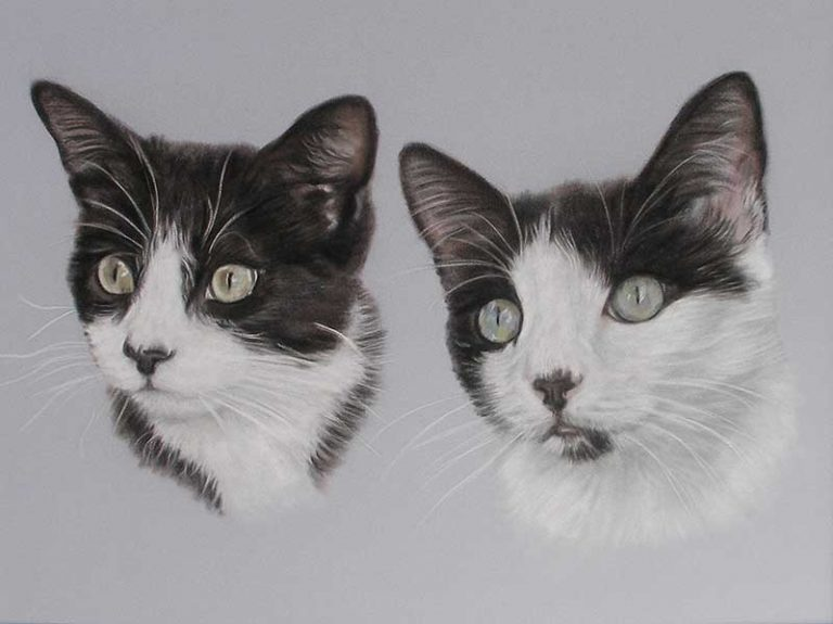 Cat Portrait Artist
