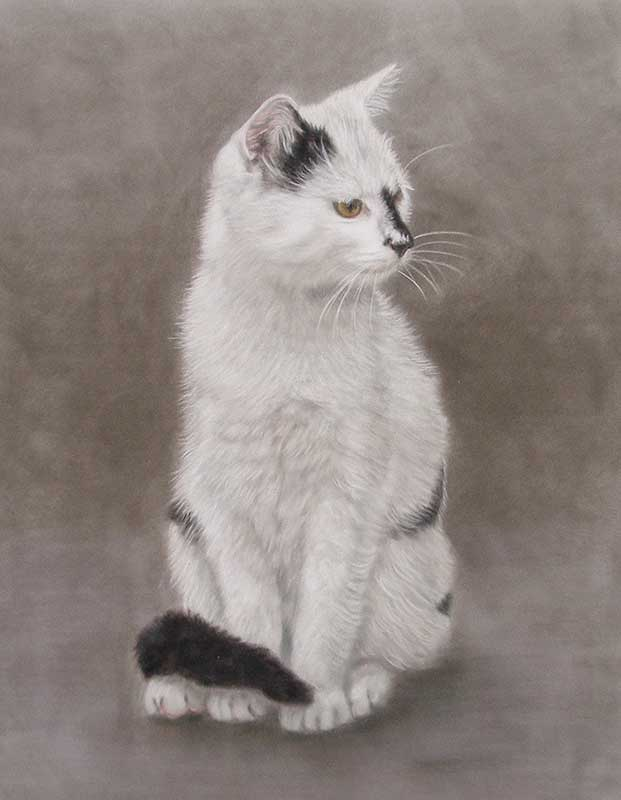 Pastel Cat Portraits