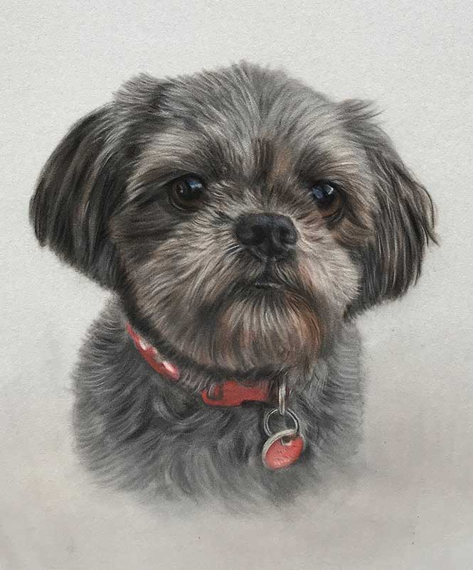 Pet Portraits by Pet Portrait Artist Lorraine Gray
