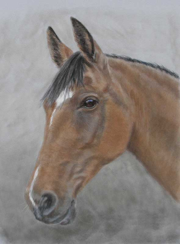 Horse Paintings by Lorraine Gray