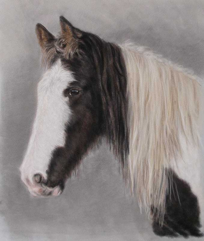 Pastel Horse Portrait by Loraine Gray