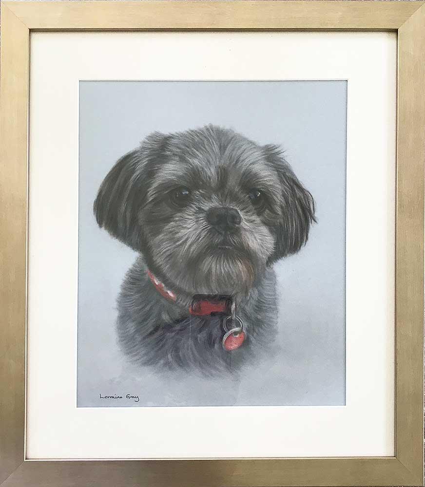 Shih Tzu Portrait by Lorraine Gray