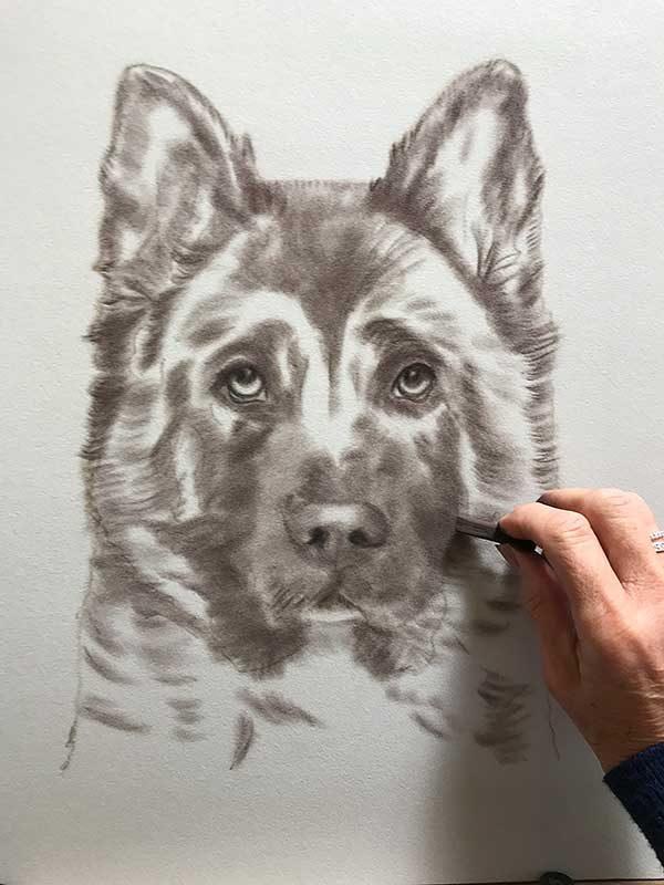 Akita Portrait work in progress