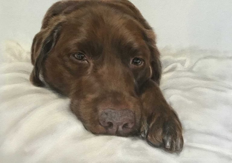 chocolate labrador portrait