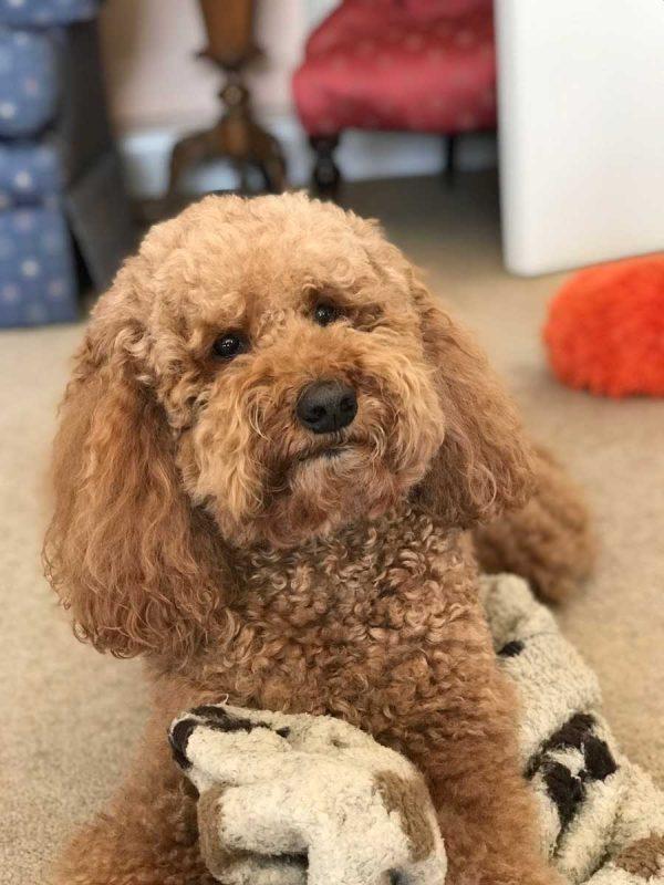 Pet Portrait Photo tips