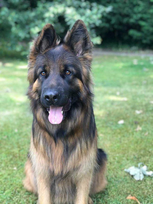 pet portrait photo advice