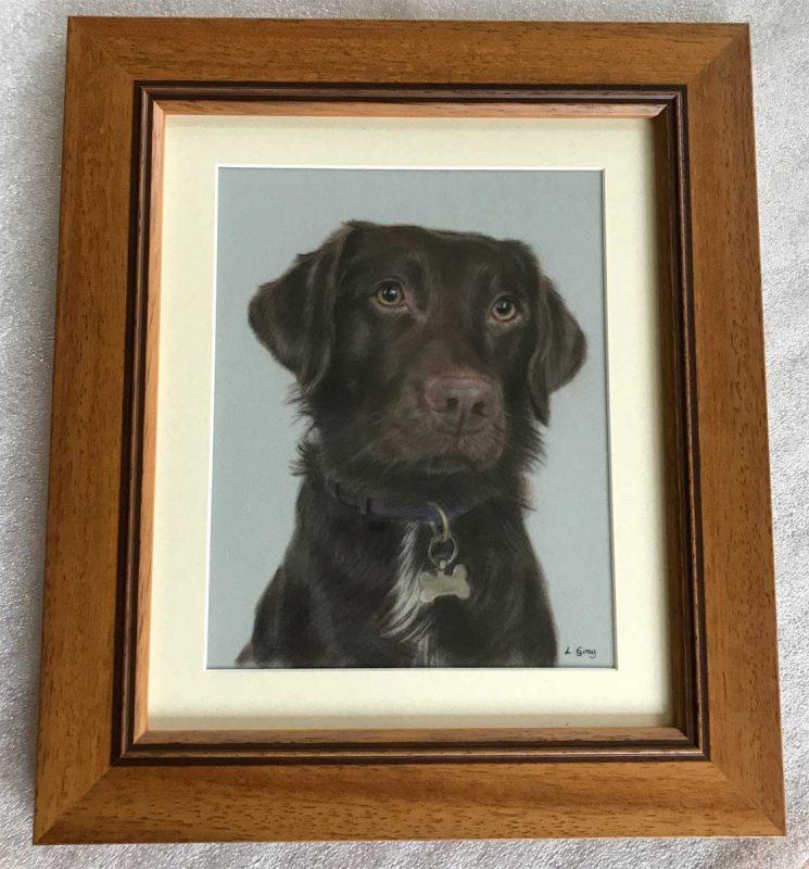 Framed Springador portrait