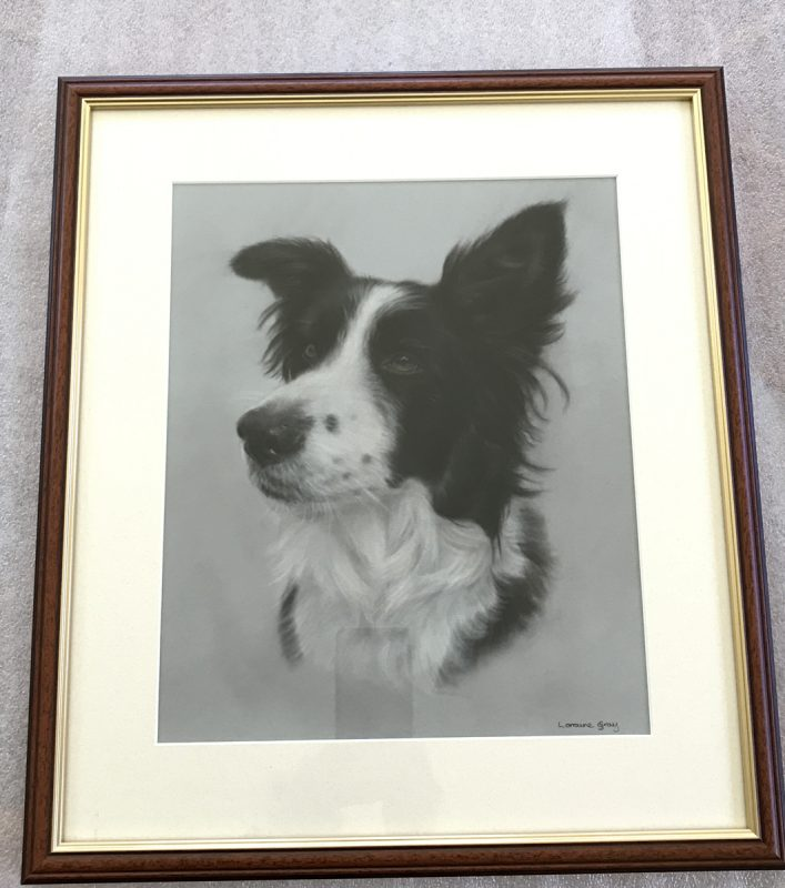 Border Collie Portrait framed