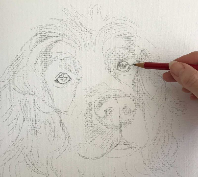 Pencil Sketch of a Spaniel