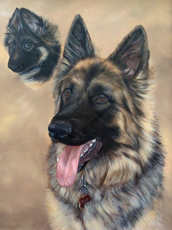 German Shepherd portrait in oils