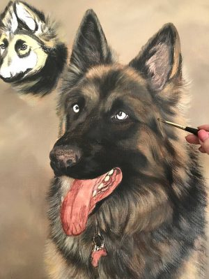 German shepherd portrait work in progress