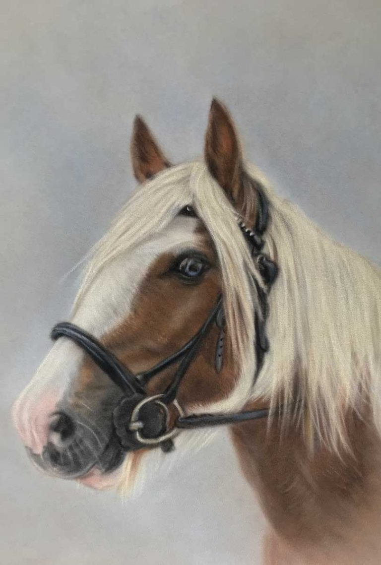 Horse Portrait Commission