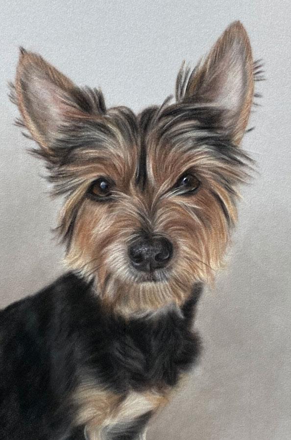 Yorkshire terrier portraits