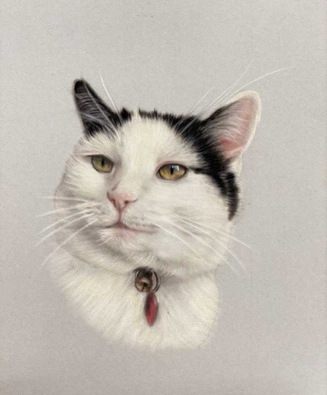 Cat Portraits as gifts