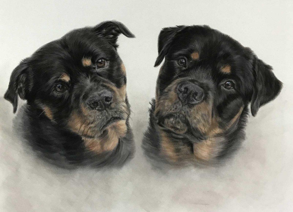 Rottweilers Pet Portrait